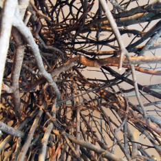 'Nesting Structures' Made of Tree Branches Take Shape in Lehman Art Gallery